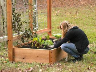 Đơn giản hóa thời gian chăm sóc với việc tạo luống trong vườn
