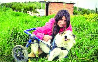 Hy sinh cuộc sống riêng để chăm sóc 450 chú chó hoang
