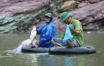 Hồ Kẻ Gỗ dừng xả lũ, dân thả lưới bắt cá khủng