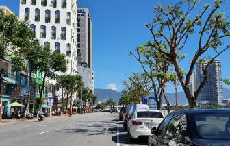 Đà Nẵng: Mùa nắng đi cắt tỉa cây, mùa mưa thì cắt trọc