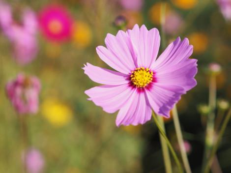 12 loại hoa cho người mới bắt đầu làm vườn