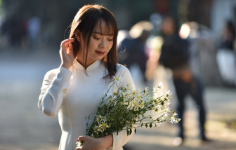 Thiếu nữ khoe sắc cùng cúc hoạ mi dưới nắng thu Hà Nội