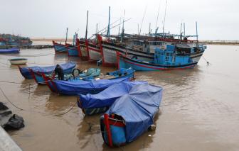 """Phú Yên: Tôm hùm chết nhanh vì """"sốc nước ngọt"""", thiệt hại hàng tỷ đồng"""