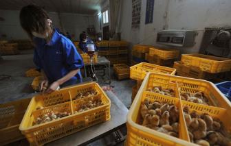 Số người nhiễm cúm gia cầm tăng nhanh ở Trung Quốc