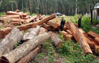 Doanh nghiệp làm mất 320ha rừng suốt 13 năm, ai chịu trách nhiệm?